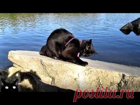 Танец кота - YouTube