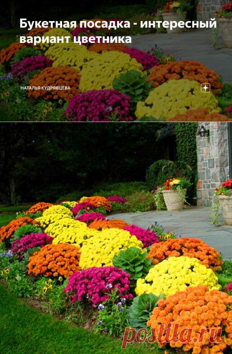 Букетная посадка - интересный вариант цветника | Наталья Кудрявцева | Яндекс Дзен