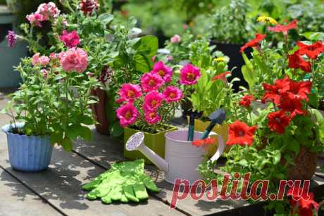 10 цветов, которые непрерывно цветут все лето: опыт выращивания, фото