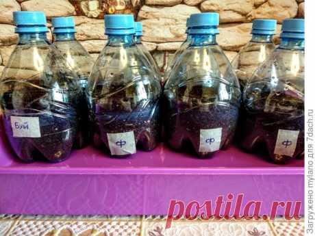 «Инкубаторы» для посева из пластиковых бутылок