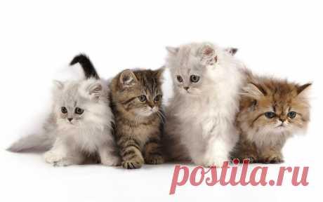 Cats - murkotik