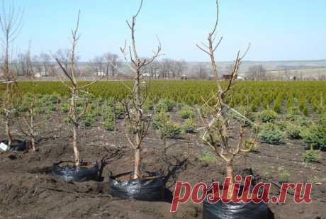 Какие деревья рядом с какими садить не стоит? Таблица совместимости! | Pro100ogorod | Яндекс Дзен