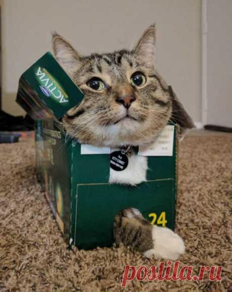 Коты - это жидкость: животные нашли применение коробкам и другим предметам  Рубрика Досуг - Животные: Коты - это жидкость: животные нашли применение коробкам и другим предметам . Читай последние новости событий на Joinfo.ua