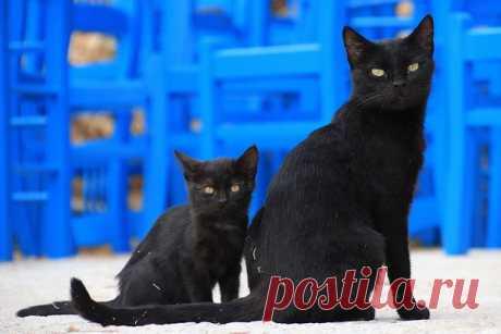 День защиты черных котов в Италии — Интересные факты