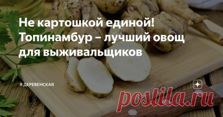 Не картошкой единой! Топинамбур – лучший овощ для выживальщиков Самый простой в выращивании овощ, к тому же богатый полезными веществами!