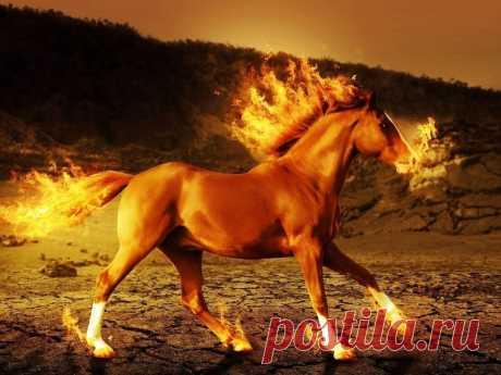 Талисманы для людей, родившихся в год Лошади | nashi-pitomcy.ru