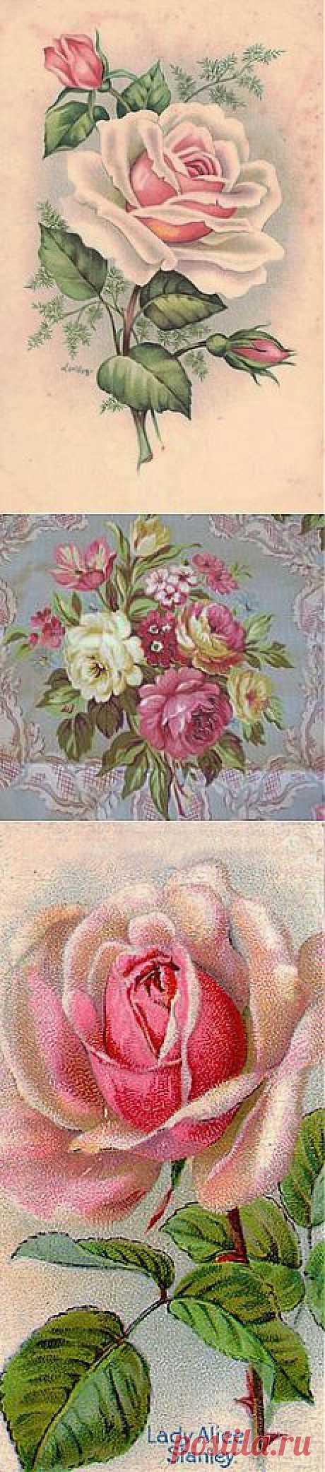 Vintage roses в Pinterest