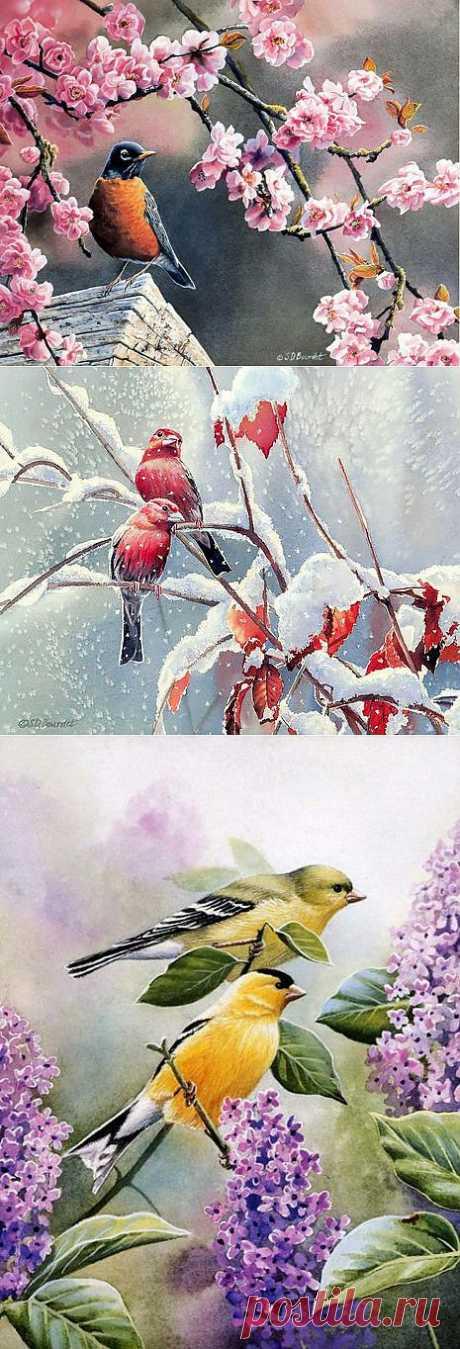 Художница Сьюзан Бордет, Susan Bourdet. Птицы и акварель | Usenkomaxim.ru