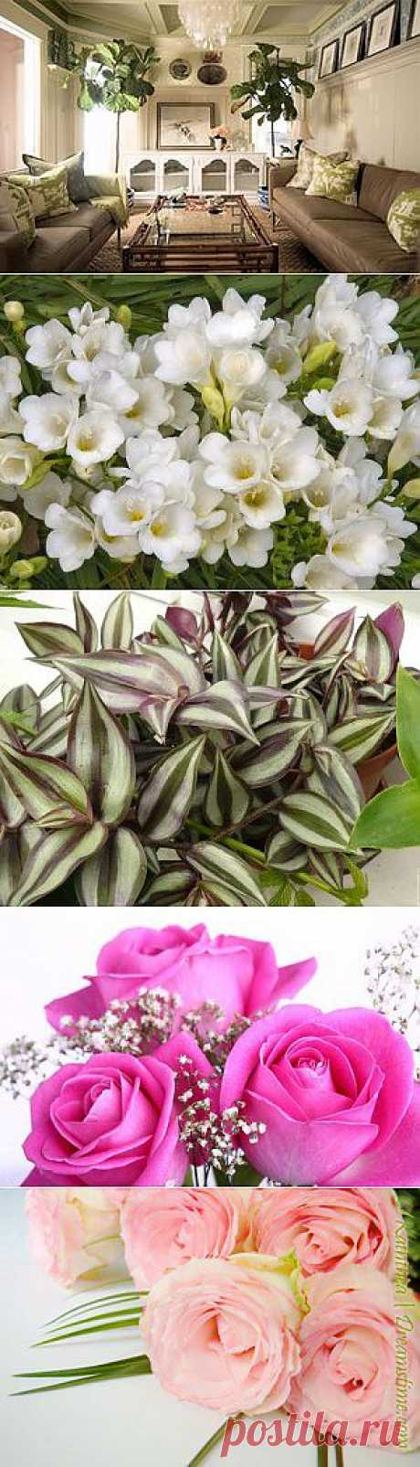 Интересные факты о комнатных растениях | Все о цветах