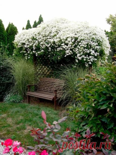 Соседка подсказала, как правильно удобрять клематис, чтобы цвел дольше и был пышнее | Добрый дачник | Яндекс Дзен