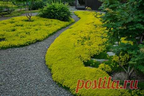 Революция в саду. Ч.3: Создаем малоуходный сад!   Сказки сада   Яндекс Дзен
