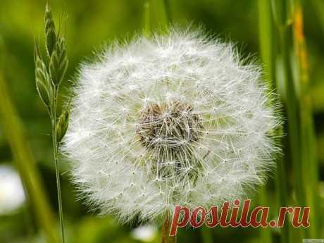 Hi from warm Summer \ud83c\udf38\ud83c\udf3c #Ялюблюцветы