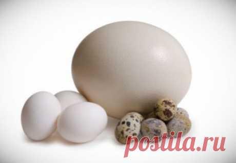 Сравнение яиц домашней птицы по вкусу, питательности и пользе Верно старое высказывание: «Все познается в сравнении». Только таким путем можно найти истину.  Яйцо птицы – это кладовая, в которой сконцентрированы наиболее значимые для организма человека питательные вещества, микроэлементы и витамины.  На домашних и фермерских подворьях предпочтение отдается
