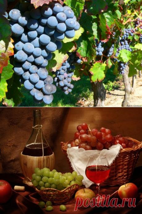 Виноградное вино Изабелла, домашнего приготовления.