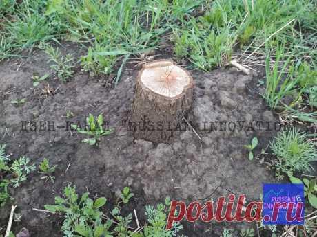 Как без корчевания уничтожить пень на участке (два способа) | RUSSIAN INNOVATION | Яндекс Дзен