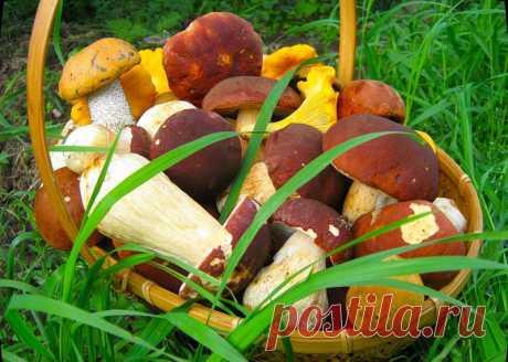 Какие грибы сколько варить » Женский Мир