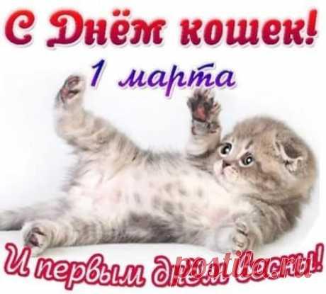 всемирный день кошек картинки