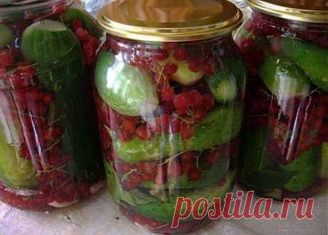 Огурцы, засоленные со смородиной / Простые рецепты