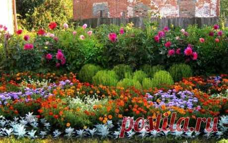 Садоводу на заметку - неприхотливые многолетние цветы для сада