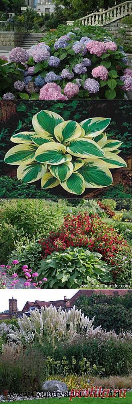 Растения, которые без труда украсят любой сад | ЖЕНСКИЙ МИР