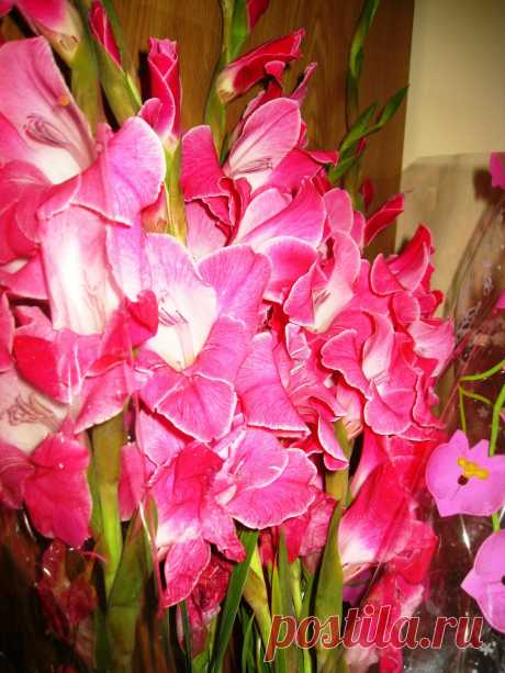 Bouquet With Gladioluses  Free Stock Photo HD - Public Domain Pictures