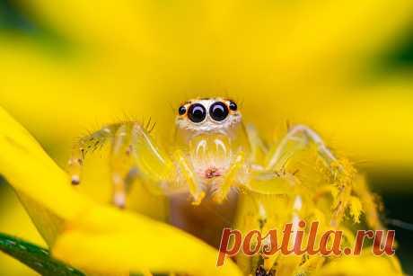 Жуки, ящерицы и лягушки попали на лучшие снимки 2020 года (фото) - Новости Mail.ru
