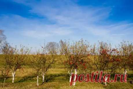 7 шагов до урожайного сада, или Все о выращивании плодовых деревьев - Наша дача - медиаплатформа МирТесен