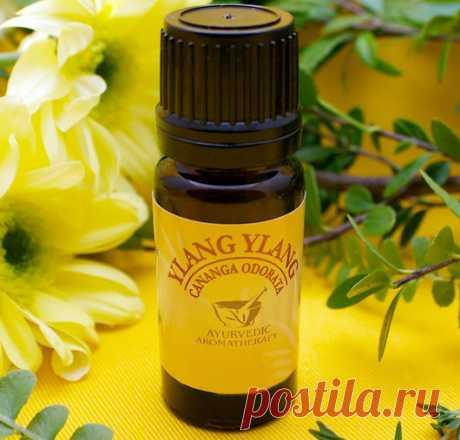 Масло иланг-иланг — его полезные свойства и способы применения. Как правильно применять эфирное масло иланг-иланг для красоты и здоровья.