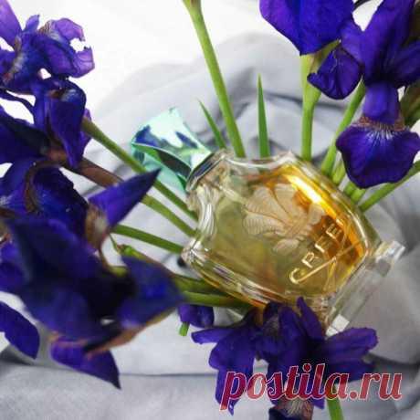 Как пахнет Софи Лорен или 4 любимых парфюма культовой красавицы | Аромат твоего тела | Яндекс Дзен