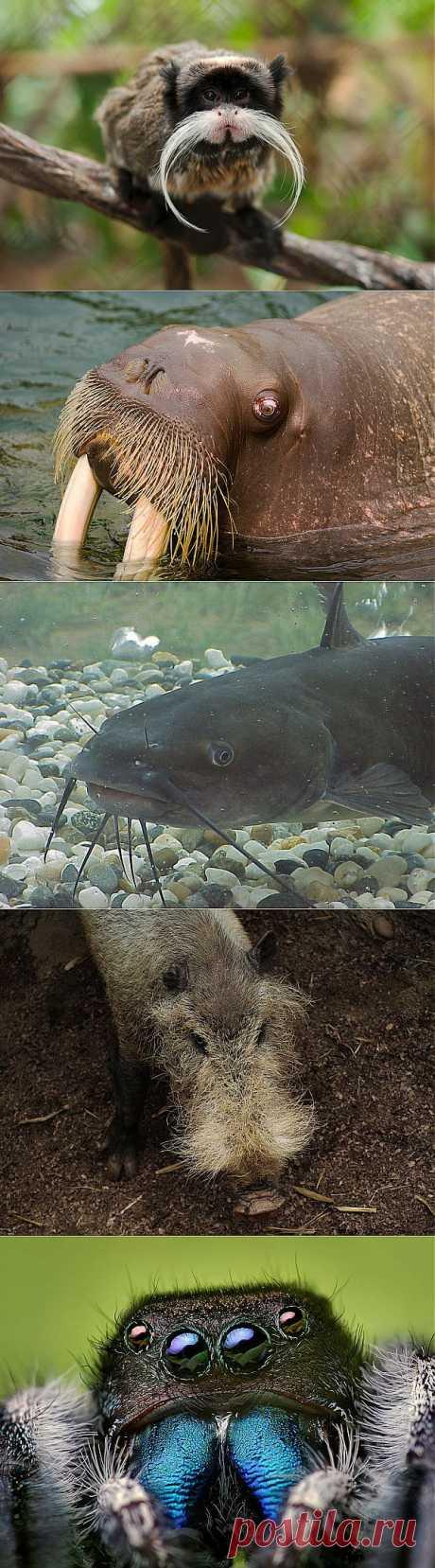 Удивительные животные, которые могут похвастаться усами | Наука и техника