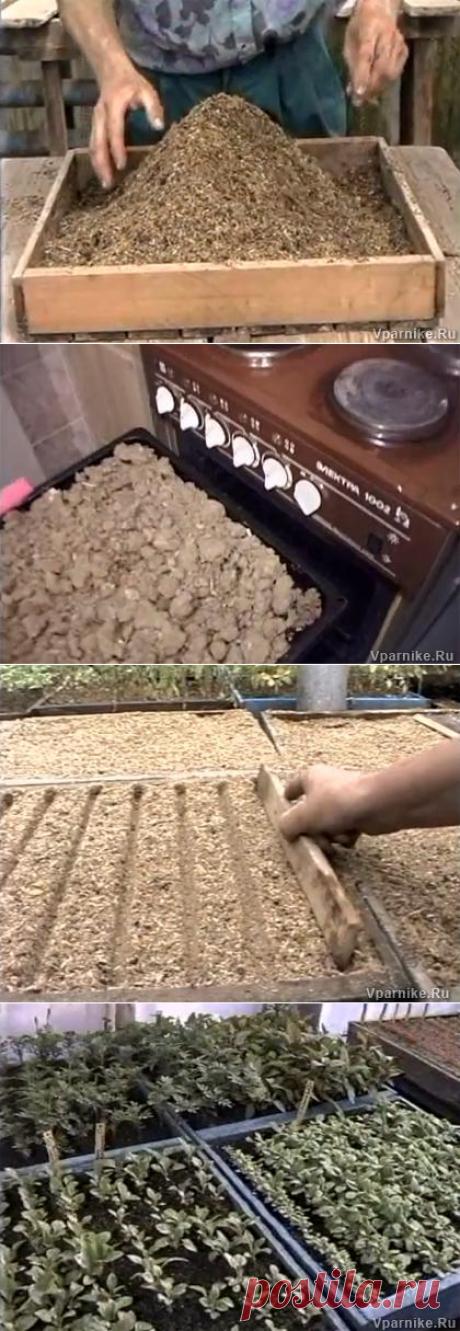 Тонкости посева семян на рассаду. Метод доктора Миттлайдера. Видео 3 | Vparnike.ru
