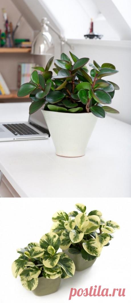 8 лучших комнатных растений-фильтров. Какие растения лучше очищают воздух? Список, фото - Ботаничка.ru - Страница 4