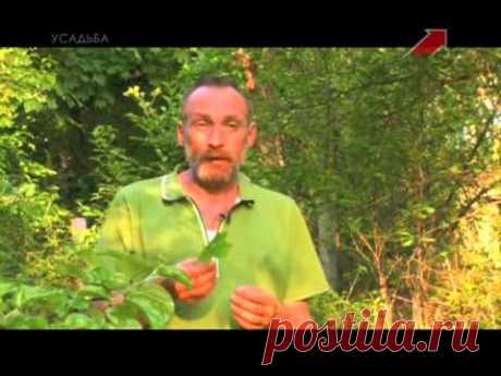 Огородные вредители. 02. Клопы — Яндекс.Видео