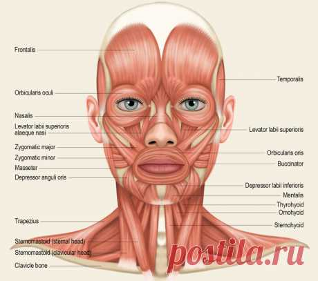 Massage by a tablespoon: Lymphatic drainage and lifting of skin