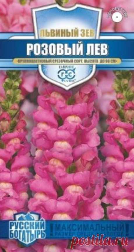 """Семена. Львиный зев """"Розовый лев"""" (вес: 0,1 г) Всхожесть: 78%. Великолепный крупноцветковый срезочный сорт. Декоративное растение из семейства Норичниковые, культивируемое как однолетник, высотой 70-90 см. Цветет с конца июня до поздних заморозков. Цветки собраны в кистевидные соцветия светло-розовой окраски. Холодостоек, светолюбив..."""