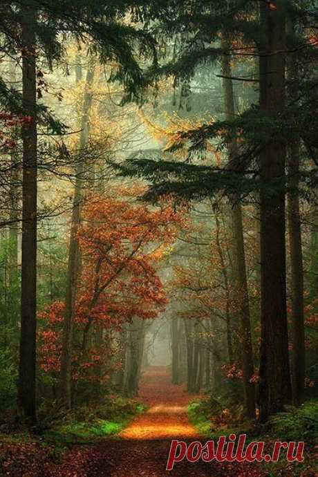 (158) Pinterest - Autumn in The Netherlands   Places I will go Someday