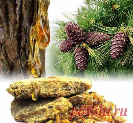 Кедровая живица – что это?  Состав и полезные свойства кедрового масла  Кедровое масло - настоящая природная кладовая полезных биологически активных веществ.