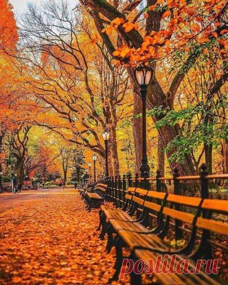 Я ухожу в осеннюю аллею…  Бреду неспешно, листьями шурша…  И ни о чём я больше не жалею,  Осенний блюз поёт моя душа…