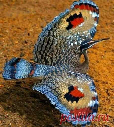 Птица-бабочка