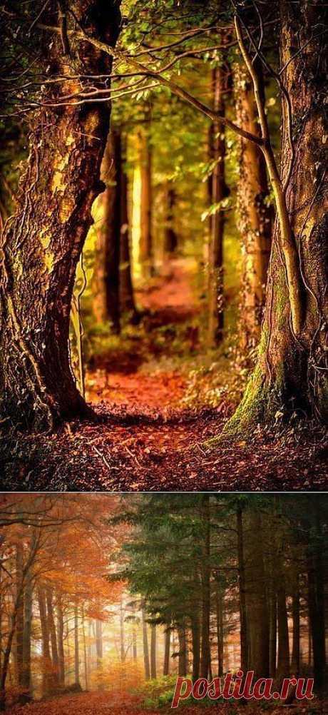 Гуру путешествий|Туризм|Путешествия|Природа|Туры