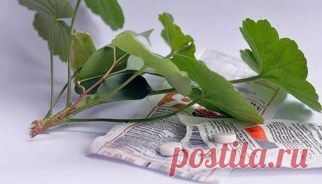 Всегооднатаблеткаивашицветыбудутвамблагодарны — Дай урожай