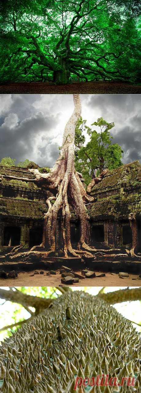 Удивительные деревья / Туристический спутник