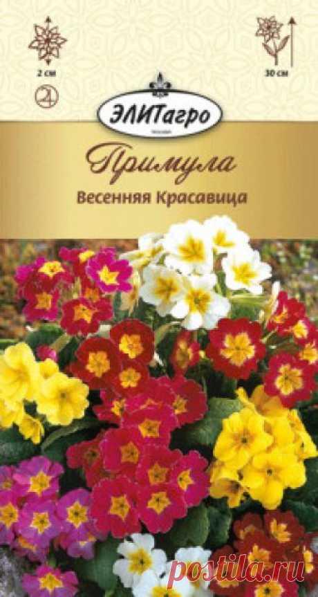 """Семена. Примула """"Весенняя Красавица"""", многолетник (вес: 0,02 г) Всхожесть: 89%. Настоящая королева весенних цветников. Многолетнее выровненное, компактное растение, высотой до 30 см. Многочисленные цветки до 2 см в диаметре, самой разнообразной окраски, собраны по 5-10 штук в зонтиковидные соцветия. Цветение обильное. Очень декоративна в групповых..."""