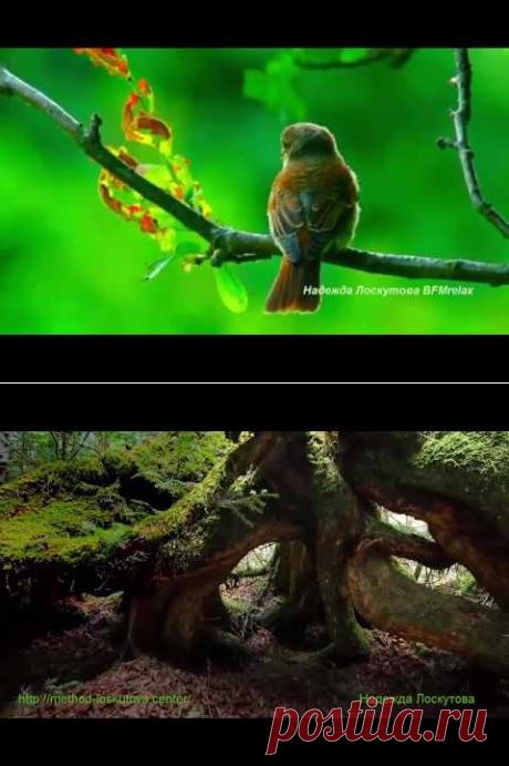 Нежная музыка для души и ЖИЗНИ,а Пение птиц Успокаивает нервную систему. - YouTube