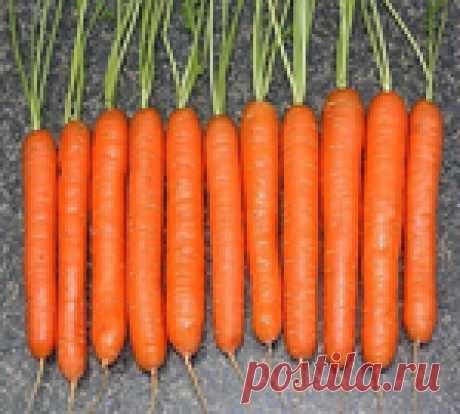 Я морковь сею вот как.