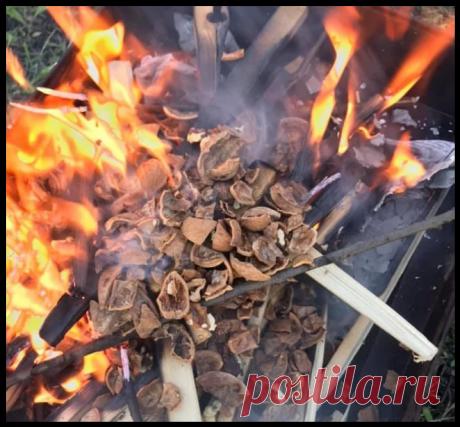 Сосед рассказал, почему лучше и полезнее использовать скорлупу грецкого ореха для мангала вместо угля...