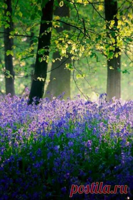О, весна без конца и без краю – Без конца и без краю мечта! (с)