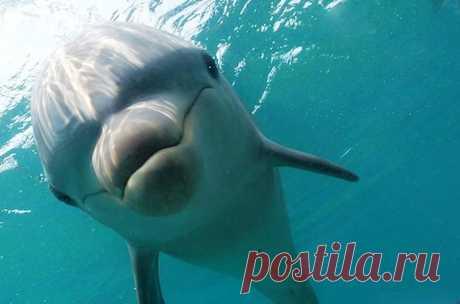 Самые удивительные факты о дельфинах • НОВОСТИ В ФОТОГРАФИЯХ