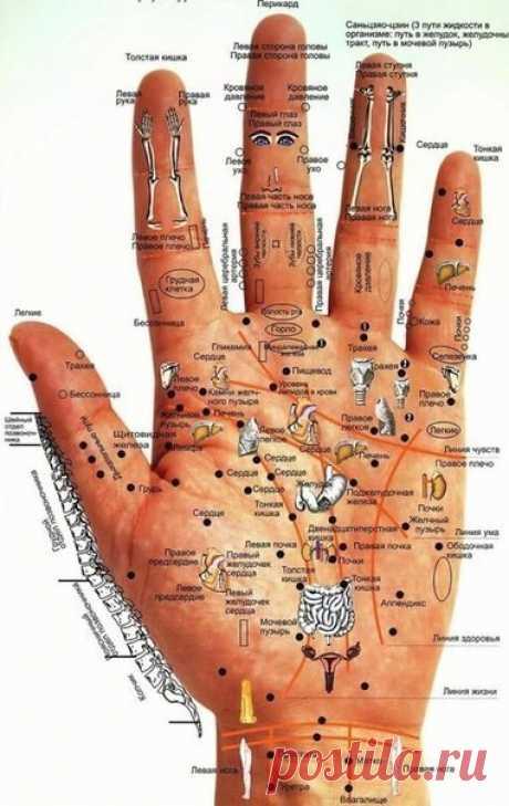 Болезни человека — на его руках.    Стимулируя любым способом (тепло, надавливание, эфирные масла) эти точки, вы стимулируете работу внутренних органов.  Руки— кладезь всевозможной информации: по ним, как по книге, можно узнать не т…
