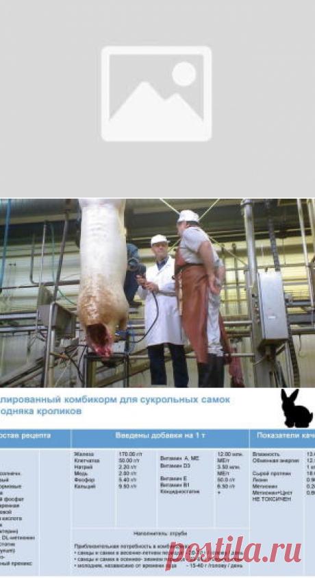 Биоконверсия питательных веществ корма в мясную продукцию - БиоКорова